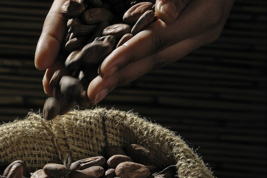 Dal-cacao-al-gelato